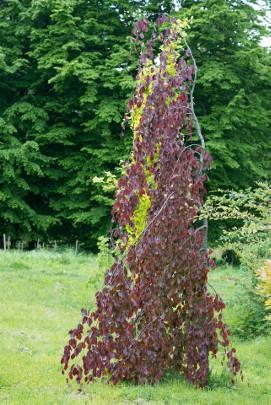 Drzewa Do Małego Ogrodu Przegląd Sprawdzonych Gatunków I