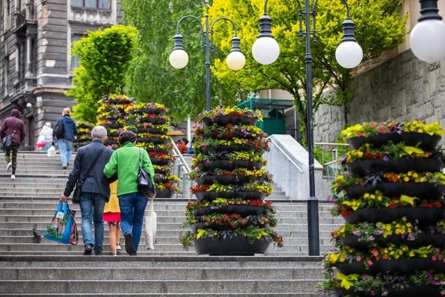 Kwietne wieże znalazły się m.in. na schodach prowadzących do ul. 11 Listopada