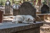 Wierne nawet po śmierci. Te psy podbiły serca na całym świecie. Najbardziej wzruszające historie bohaterskich czworonogów