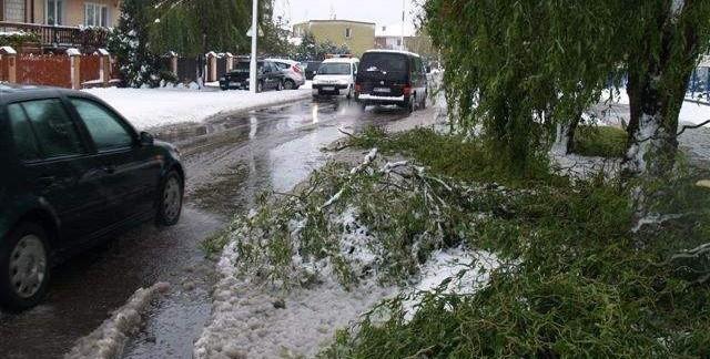 W Wyszkowie silne wiatry i ciężki, mokry śnieg połamały wiele drzew i gałęzi