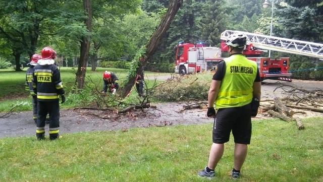 Pochylone drzewo w Parku Kościuszki zagrażało przechodniom oraz sieci sieci energetycznej i światłowodowej
