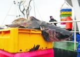 Zakaz połowu dorszy uderzył w firmy organizujące rejsy wędkarskie. Armator z Jastarni: Jestem dziś w katastrofalnej sytuacji