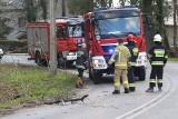 Okolice Wrocławia: Mocny wiatr przewrócił drzewo na linię energetyczną [ZDJĘCIA]