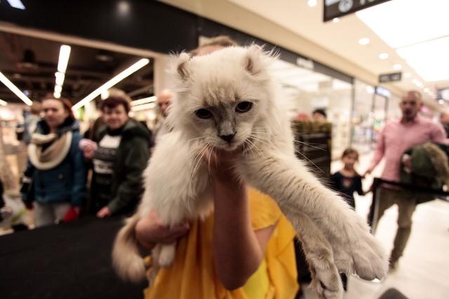 Wystawa kotów w bydgoskich Zielonych Arkadach.