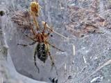 Ugryzienia tych pająków są niebezpieczne! Jad tych pająków jest groźny dla zdrowia! Najbardziej jadowite pająki w Polsce! 19.06.2021