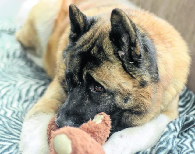 Psie lęki mogą mieć podłoże genetyczne, ale również mogą wynikać z wychowania