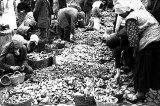 Kraków. Rynek Główny pełen grzybów. Tak handlowano skarbami lasu [ARCHIWALNE ZDJĘCIA]