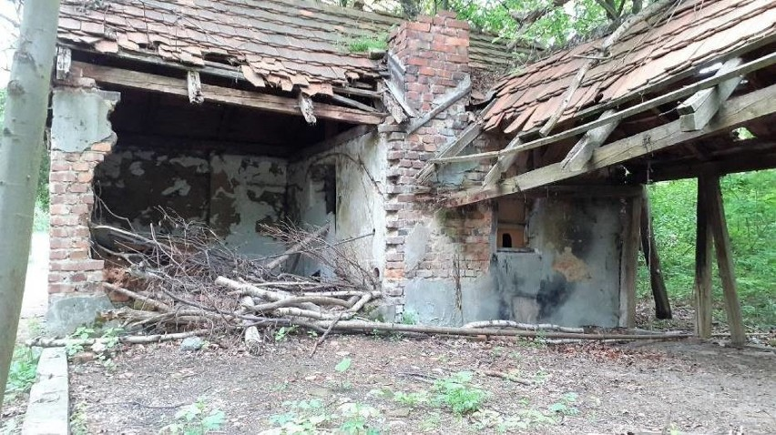 Pozostałości po bażanciarni w Rogoźnej