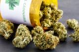 Brakuje medycznej marihuany? Popyt na nią stale rośnie. W drodze do Polski jest 40 kg suszu