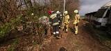 Nietypowa interwencja lubelskiej straży pożarnej. Musieli ratować świnię. Zobacz zdjęcia