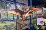 Wystawa dinozaurów i żywych pająków i insektów w Skierniewicach [ZDJĘCIA, FILM]
