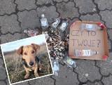 """Amerykanin sprząta Poznań. Robi to dla swojego psa. """"Jest pełno tłuczonego szkła i odchodów gołębi"""" [ZDJĘCIA, WIDEO]"""