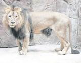 Gdańskie zoo czeka na gości. Czeka mnóstwo atrakcji