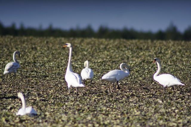 W okolice Poznania przyleciały już całe stada ptaków. W powietrzu czuć wiosnę, a natura budzi się do życia. Nad rzeką zakwitły nawet bazie kotki, czyli wierzba. Zobacz zdjęcia wiosennej Wielkopolski --->