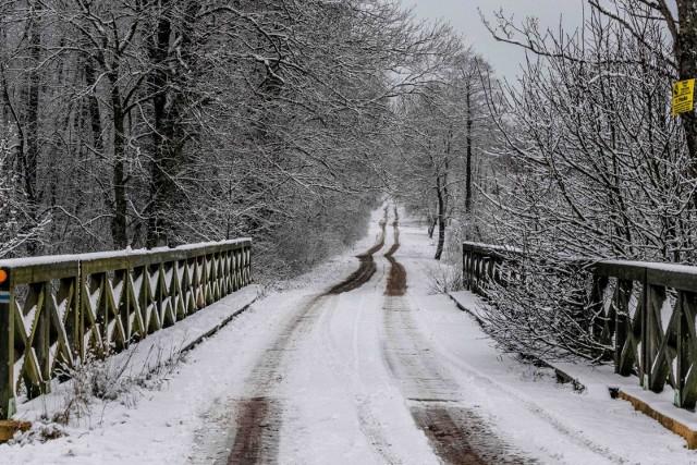 Puszcza Knyszyńska w zimowej scenerii
