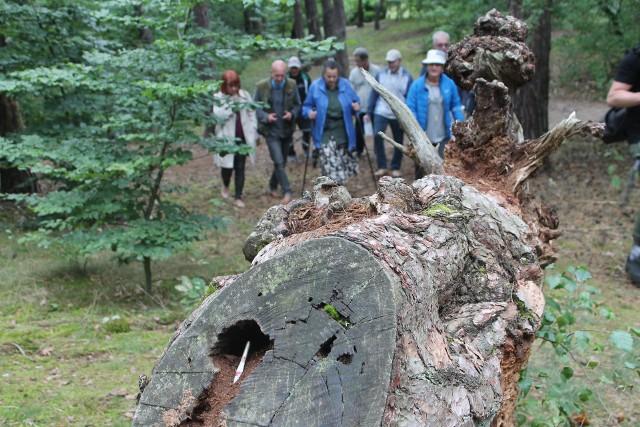 Piękny Las na Wrzosach jest nie tylko piękny, ale również bardzo ciekawy.