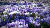 Pierwszy dzień wiosny 2020. Kiedy kalendarzowy i astronomiczny początek wiosny? RÓWNONOC WIOSENNA. Jaka pogoda na wiosnę? [21.03.2020]