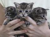 W Łodzi zwyrodnialec wyrzucił do śmietnika kocięta. Maluchy zostały uratowane w ostatniej chwili. Miauczenie usłyszał pracownik MPO
