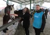 Wstępy 2018. Telewizja pokazała, że konie w Skaryszewie mają kiepsko. Burmistrz żąda sprostowania