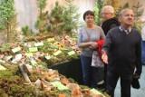 Grzyby jadalne i trujące na wystawie w Ogrodzie Botanicznym. Zobacz, zanim pójdziesz na grzybobranie