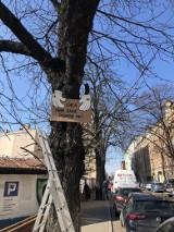 Nielegalna wycinka stuletnich drzew w Katowicach zszokowała mieszkańców. Jest zawiadomienie na policję o popełnieniu przestępstwa