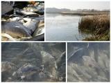 Gospodarstwa rybackie mają problem - poziom wody jest za niski
