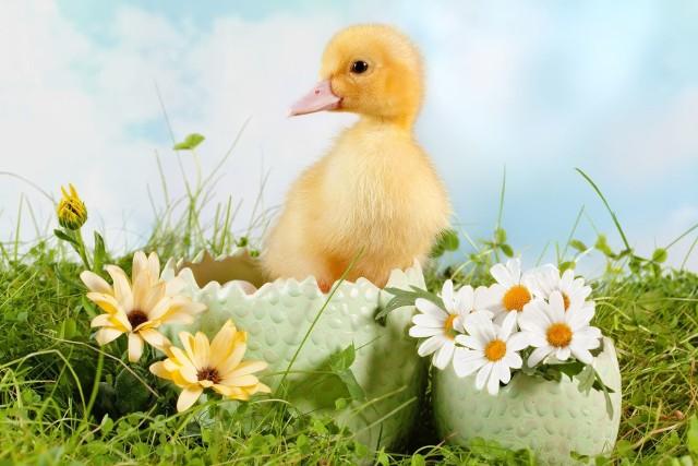 Życzenia i kartki świąteczne na Wielkanoc. Zabawne i piękne życzenia wielkanocne 2021 [SMS, wierszyki, rymowanki, łańcuszki facebook]