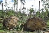 Trąba powietrzna w Kuźni Raciborskiej zniszczyła 1500 ha lasu ZDJĘCIA + WIDEO