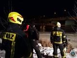 Nietypowa interwencja strażaków. Ruszyli z pomocą łabędziowi na rzece [zdjęcia]