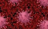 Finlandia: Odkryto nowy wariant koronawirusa. Fin-796H trudno wykryć i nie wiadomo gdzie się rozwijał