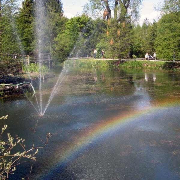Na przełomie lipca i sierpnia najbardziej ciekawym miejscem w arboretum są stawy.