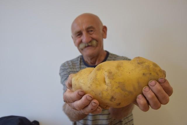 Aleksander Olejniczak z Rgielska pod Wągrowcem wyhodował ziemniaka giganta.- Tegoroczne plony ziemniaków obfitują w duże sztuki. Będzie chyba problem z sadzonkami na przyszły rok. Sporo jest ziemniaków, których waga sięga pod kilogram. Ten jednak jest szczególny. To gigant - chwali się rolnik spod Wągrowcem i pokazuje ziemniaka ważącego 1,48 kg.Przejdź do następnego zdjęcia ------>