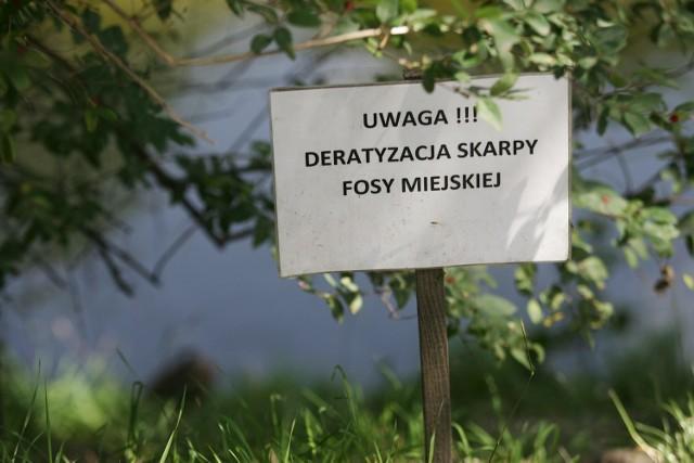Wrocław, deratyzacja w rejonie fosy miejskiej
