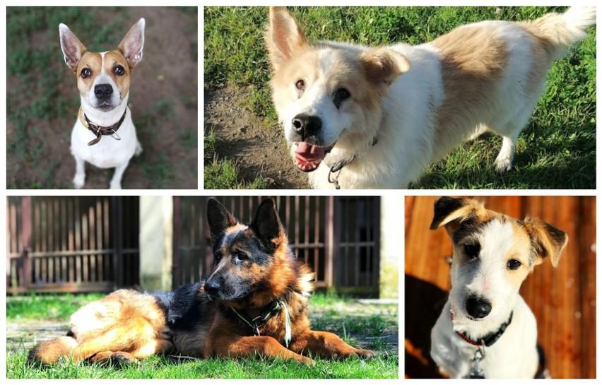 Na adopcję czekają najróżniejsze psy. Każdy z nich to inna...