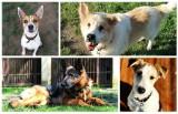 Psy ze schroniska przy ulicy Bukowskiej czekają na adopcję. Znajdź wśród nich najlepszego przyjaciela