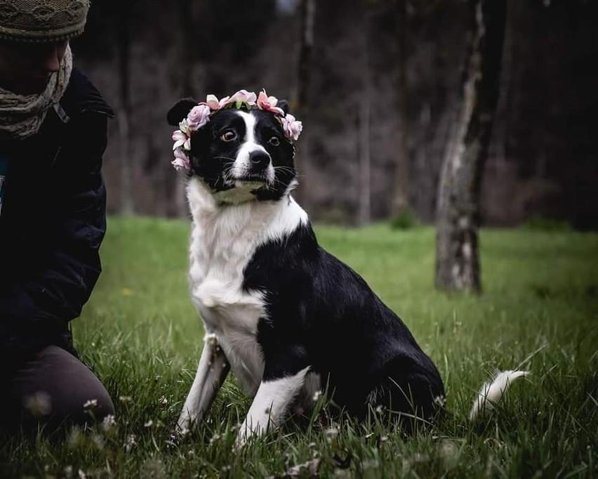 Bezdomne psy polecają się do adopcji. Zobacz zdjęcia, może...