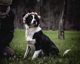 Psy do adopcji ze schroniska w Radomiu. Małe i duże, czekają na dom. Może któregoś pokochasz i przygarniesz - zobacz zdjęcia