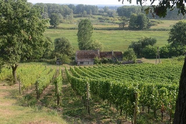 Tradycja winiarska się od wielu lat odradza. Mamy winnice, więc i Winobranie powinno się zmienić. Jak mówią zielonogórzanie - powinno być więcej Winobrania w Winobraniu.