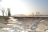 Uprawy pod lodem nie przetrwają. Będą straty po bezśnieżnej zimie. Można sprawdzić jakie