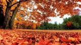 Pogoda na listopad: Biskajskie ciepło ogrzeje Polskę. Letnia aura i dużo słońca. Po przymrozkach będzie nawet 20 stopni C [5. 11. 2019 r.]