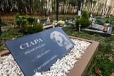 W Poznaniu powstanie pierwszy cmentarz dla zwierząt. Czworonogi pochowamy na Miłostowie
