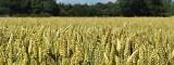 Dariusz Golec, prezes ARiMR: Każdy rolnik może liczyć na naszą pomoc [wywiad]