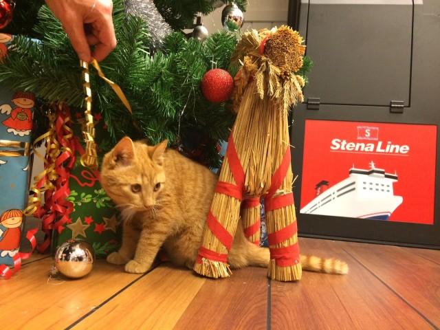 Kot podróżował  promem Stena Line.  Właściciel  poszukiwany