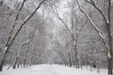 Jaka będzie zima 2021/2022? Są już pierwsze prognozy IMGiW aury na tegoroczną zimę