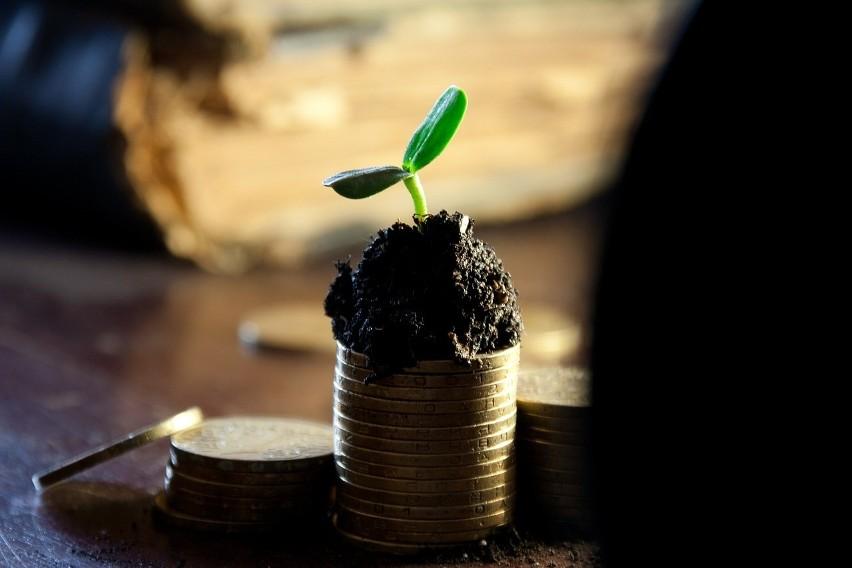 Ile Agencja przekazała rolnikowi? Dopłaty 2020, pomoc covidowa, pieniądze za chryzantemy i na dobrostan zwierząt