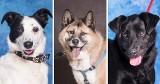 Szukasz psiego przyjaciela? Chcesz kupić czworonoga? Zanim to zrobisz, zobacz psy do adopcji, które czekają na ciebie w gdańskim schronisku