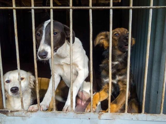 Według danych Najwyższej Izby Kontroli z 2016 roku, w polskich schroniskach żyje ok. 106 tysięcy psów