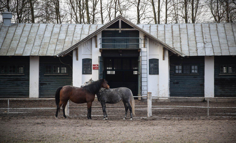 Konie Arabskie Z Janowa Podlaskiego