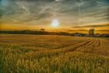 Dzierżawa ziemi rolnej - będą kryteria i punkty w przetargach ofert