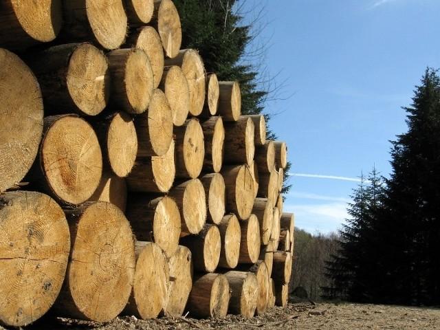 Średnio w ciągu roku Lasy Państwowe w Polsce sprzedają kilkanaście milionów drzew.